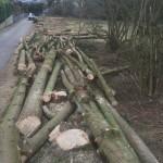 Holzpolter, Fichtenholz