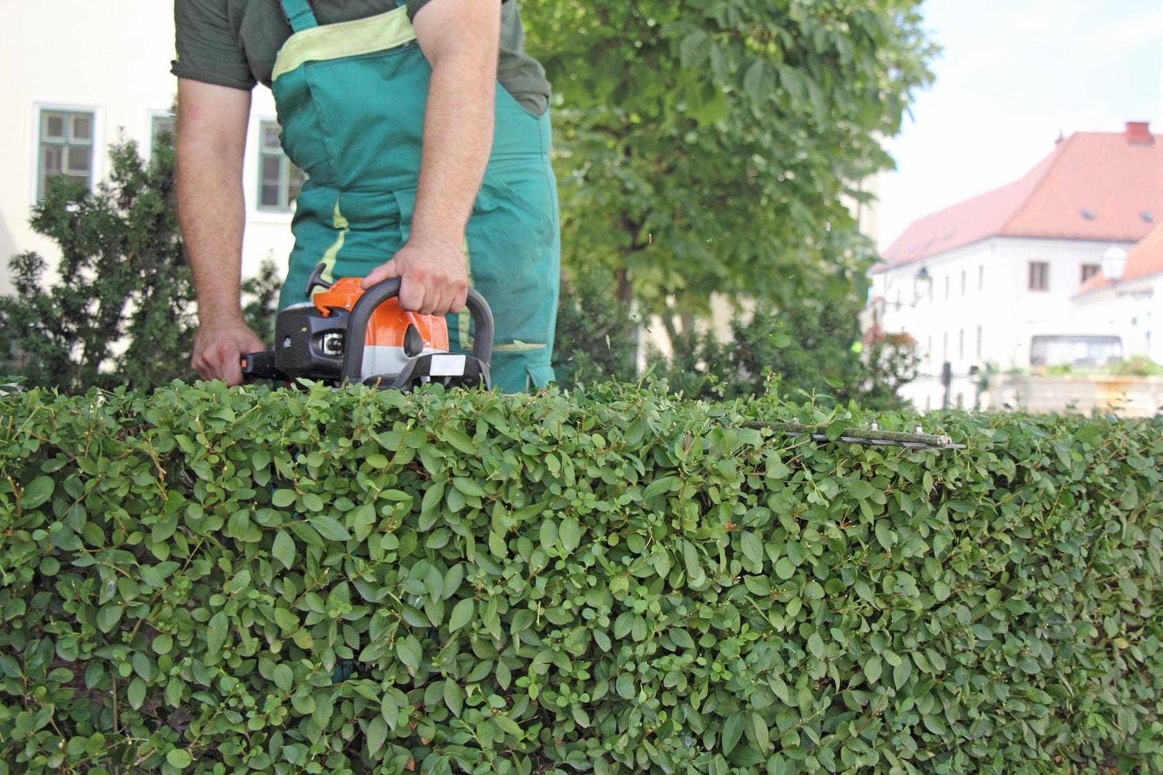 Heckenschnitt Gartenpflege Limburg Kraus