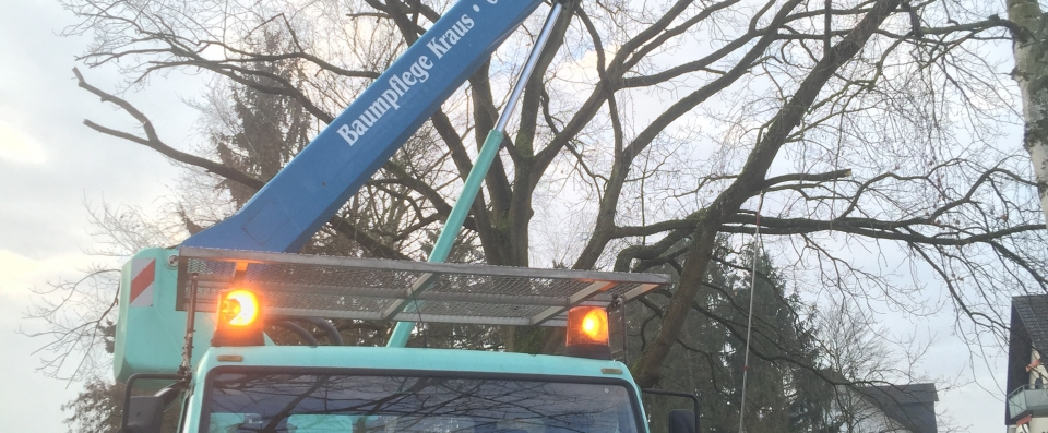 MAN Baumpflege Kraus Limburg Wumag WT220 MAN