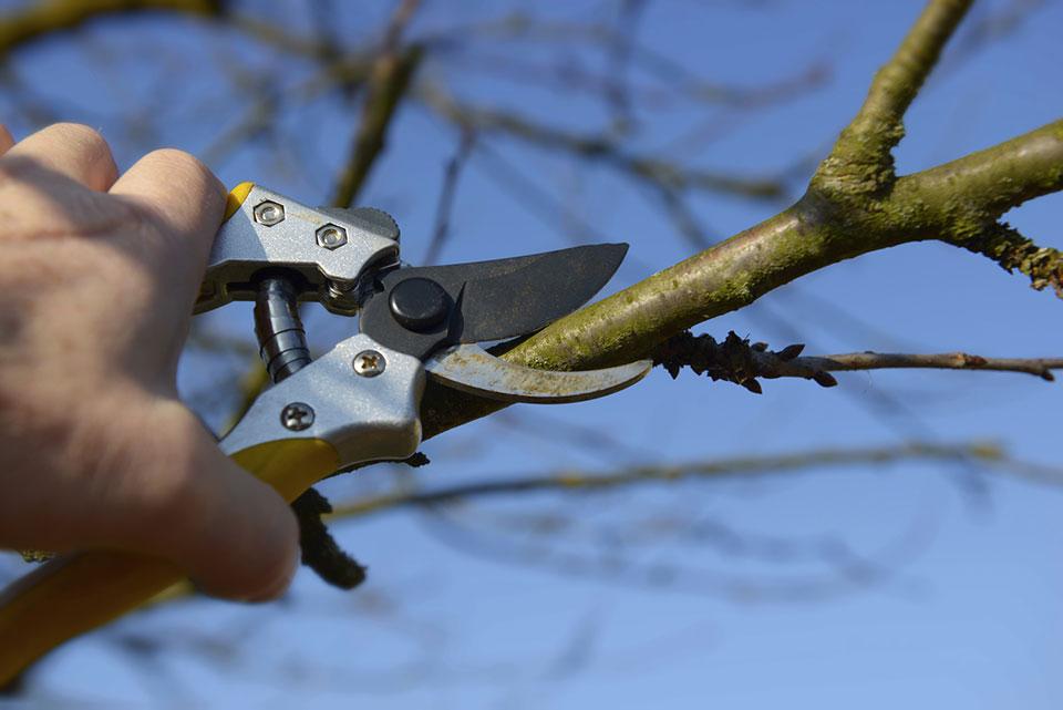 Astschere Obstbaumschnitt Ertragsschnitt