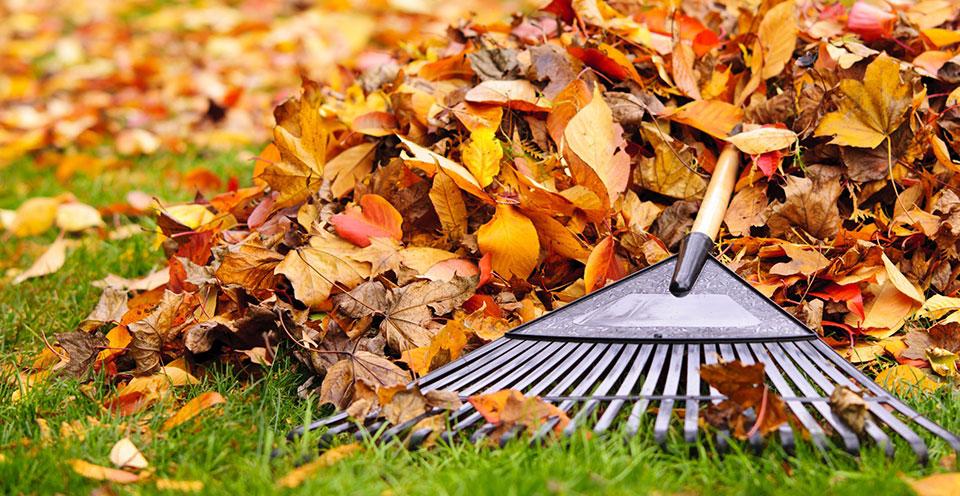 Laubrächen Herbst Laub rächen