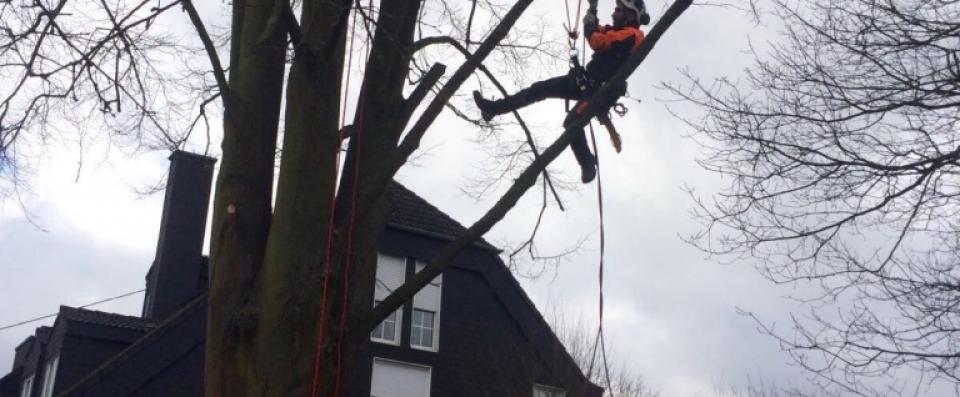 Spiderman im Baum Kletterer Baumpfleger